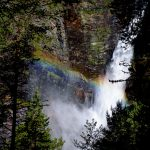 Svoufallet-forrest-rainbow